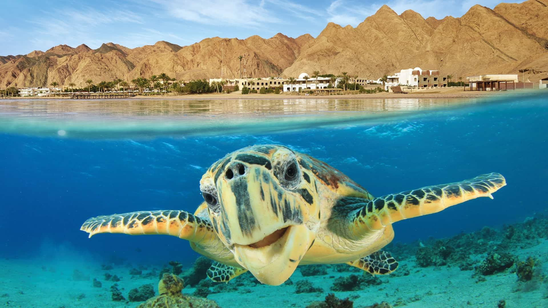 Поехать в Египет без визы